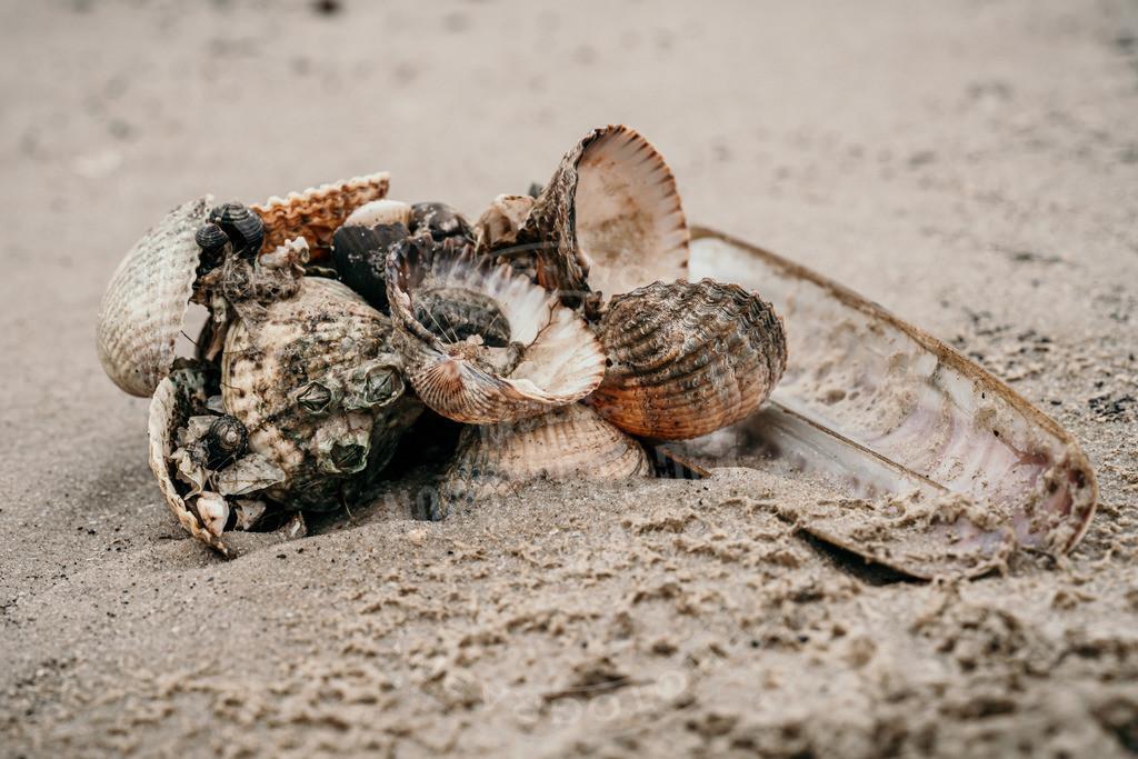 _DSC2872 | Muscheln am Strand von St. Peter-Ording