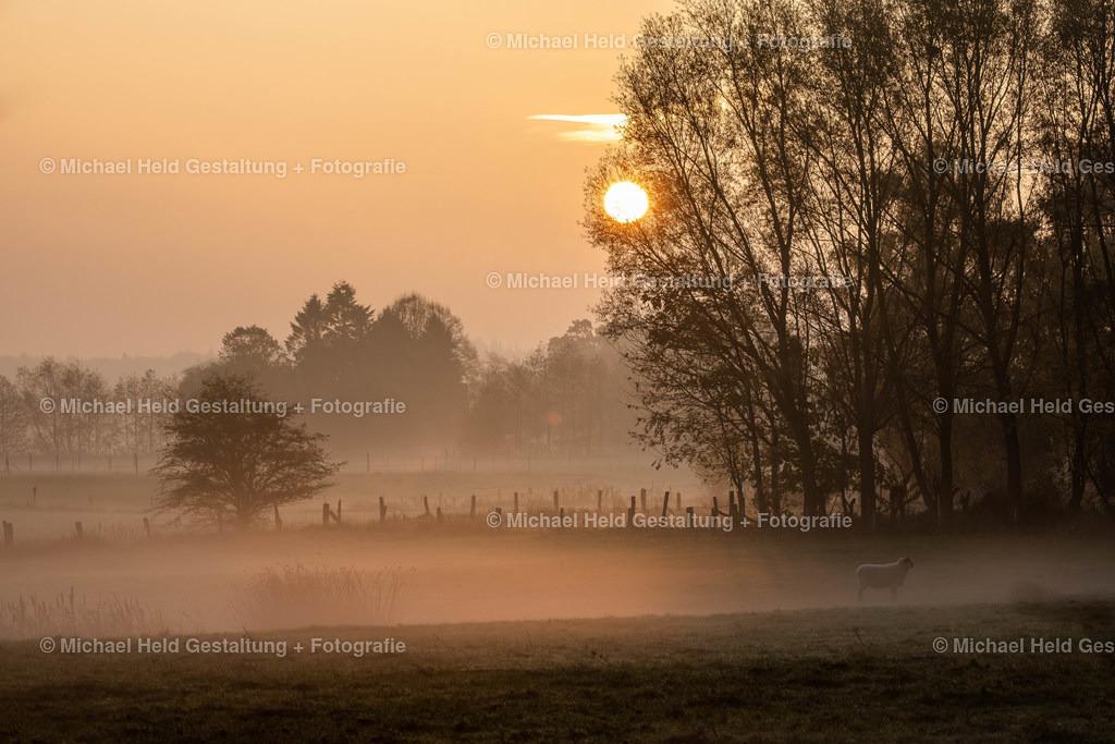 Frühnebel | Idyllischer Sonnenaufgang im Winter mit Frühnebel und Schaf