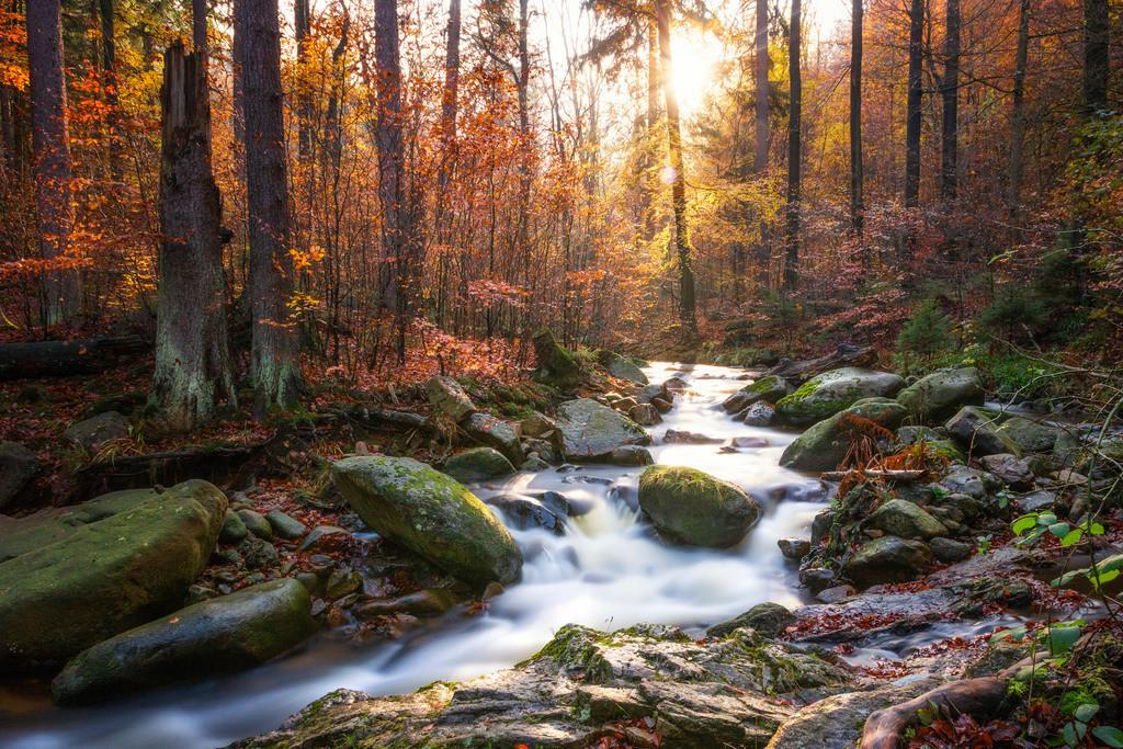 Die Ilse | Im Ilsetal im Harz
