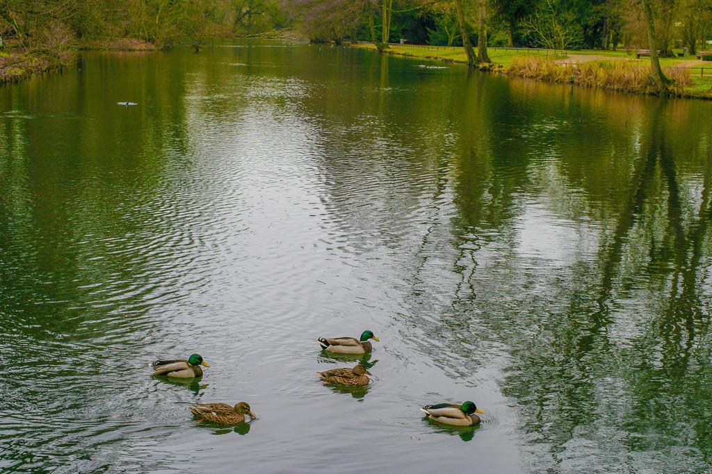 Schlosspark_Moers0221_01