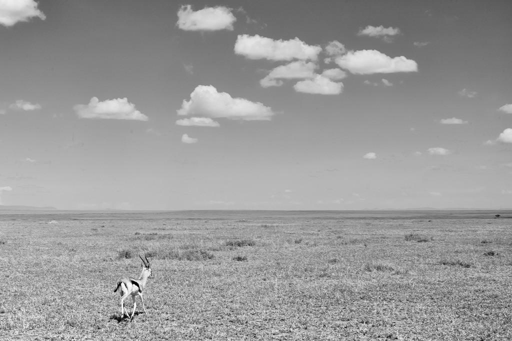 Die Weite der Serengeti   Unendliches Grasland zeichnet die Serengeti aus.