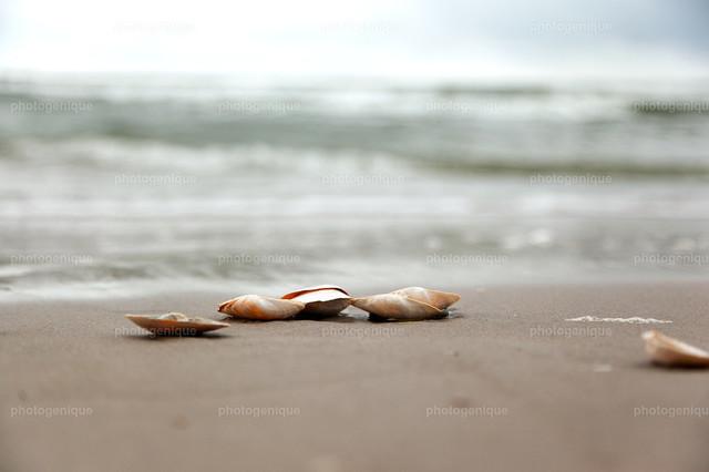 Muscheln am Strand | Muscheln am Strand