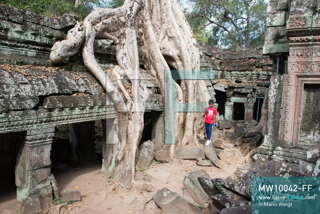 MW10042-FF | Kambodscha | Siem Reap | Reportage: Sombath erkundet Angkor | Sombath klettert an den großen Wurzeln eines Kapokbaumes im Dschungeltempel Ta Prohm vorbei.  Der achtjährige Sombath lebt in Kambodscha im Dorf Anjan, sechs Kilometer westlich von Siem Reap entfernt. In seiner Freizeit nimmt ihn manchmal sein Onkel in die berühmte Tempelanlage von Angkor mit. Besonders mag er die riesigen Wurzeln der Kapokbäume, die auf den uralten Mauern wachsen. Seine Lieblingstempel in Angkor sind Ta Prohm, Banteay Kdei und Preah Khan.  ** Feindaten bitte anfragen bei Mario Weigt Photography, info@asia-stories.com **