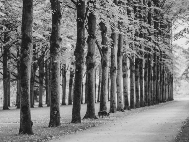 Celle (4) | exlusive Natur- Landschafts- und Makrofotografie aus Celle