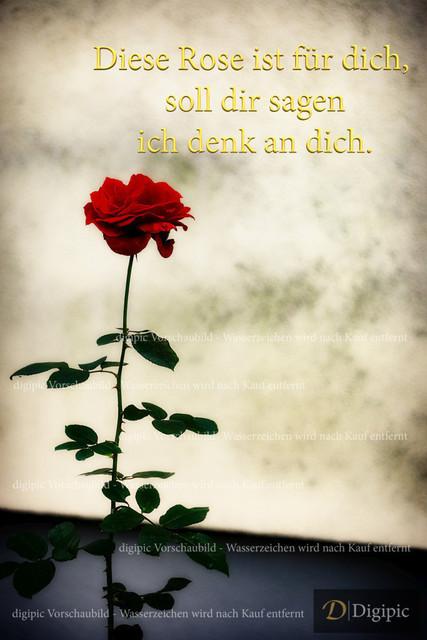 Rose mit Spruch 1 - Vorschaubild | Rose mit Spruch