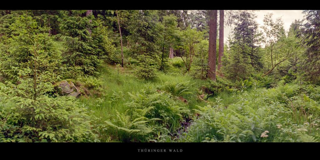 Thüringer Wald   Nadelwald mit Bachlauf im Thüringer Wald