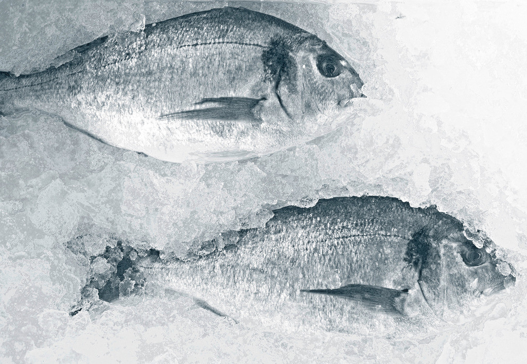 Trilogie mit Doraden 1 | zwei Doraden auf Eis