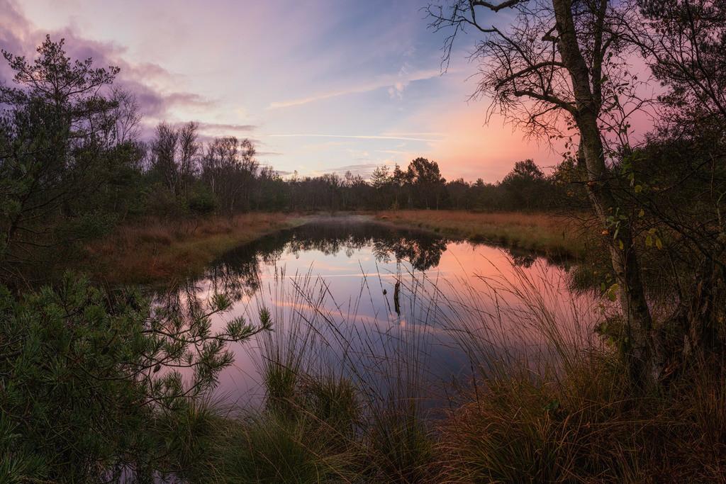 Im Hamberger Moor | Tolle Morgenstimmung im Hamberger Moor.