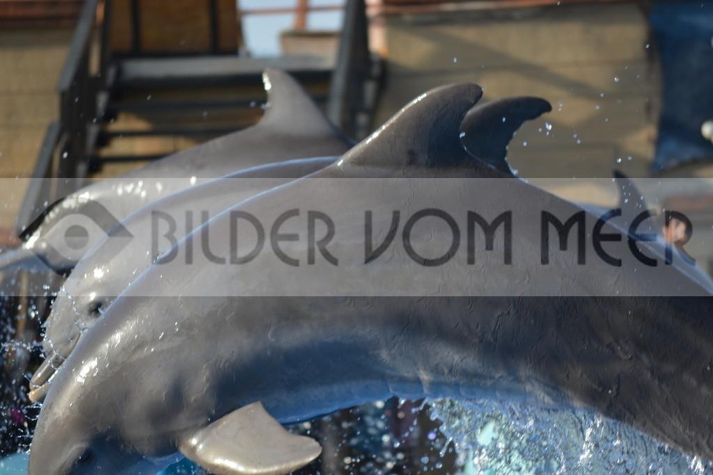 Delfin Bilder | Foto springender Delfine