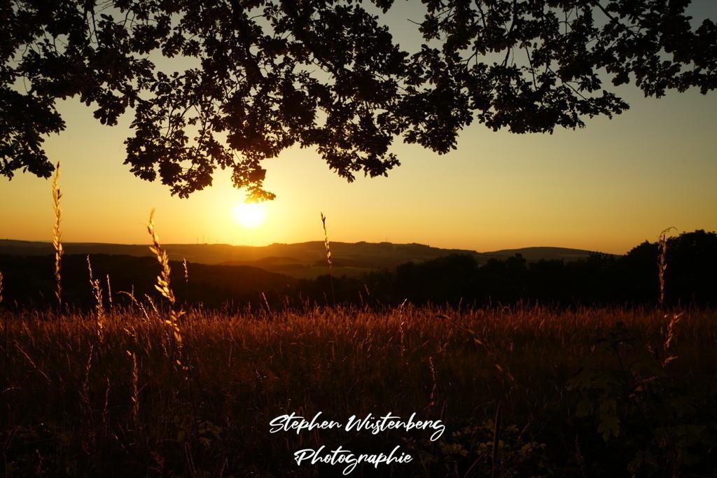 Sunset Schweisweiler | Sonnenuntergang am Reiterhof Schweisweiler unter Eichenlaub