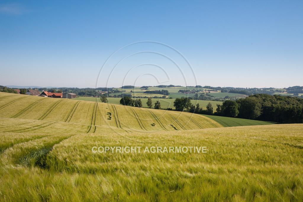 20090530-IMG_2133 | Gerstenfeld im Frühling - AGRARFOTO Bildagentur