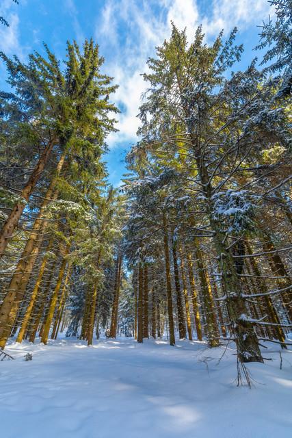 Wald im Winter bei St. Englmar