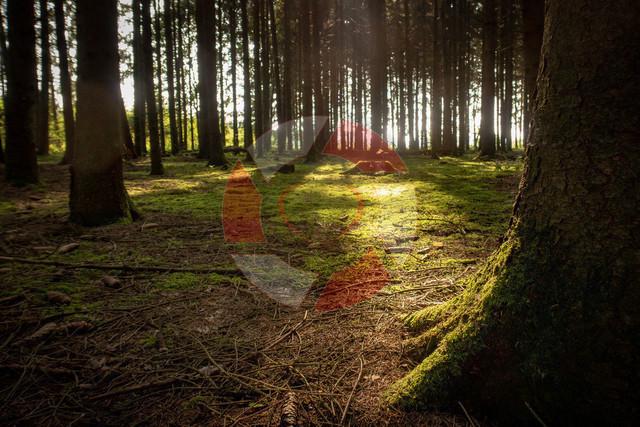 Waldlicht | Im Wald in Neuhof