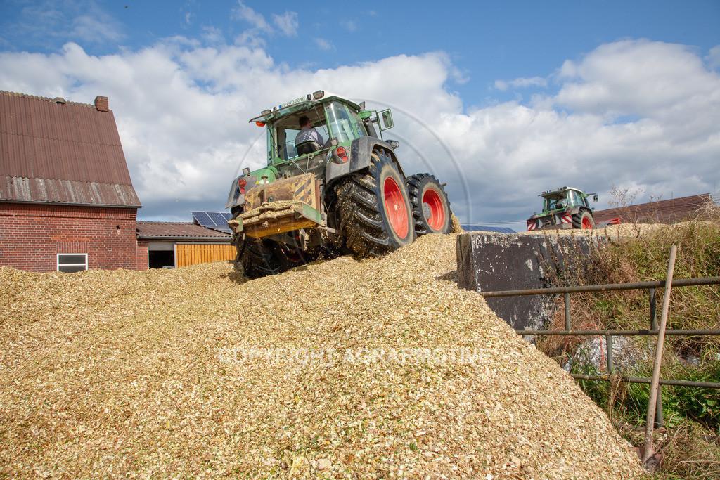 20080914-IMG_9123 | Silomais wird gehäckselt - AGRARFOTO Bilder aus der Landwirtschaft