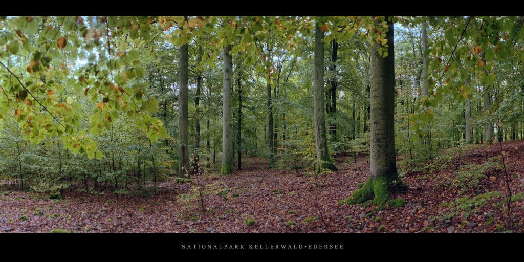 Nationalpark Kellerwald-Edersee   Buchenwald mit Buchen im Nationalpark Kellerwald-Edersee im Herbst