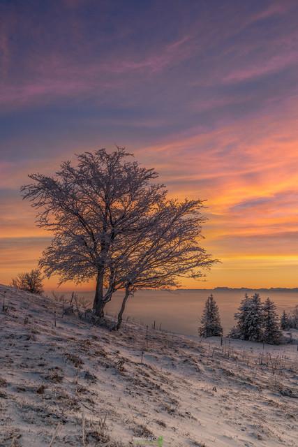 P1045478a   Frostiger Sonnenaufgang mit wunderschönem, farbigem Himmel