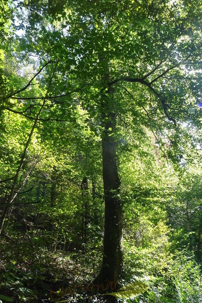 Grüner Kraftbaum