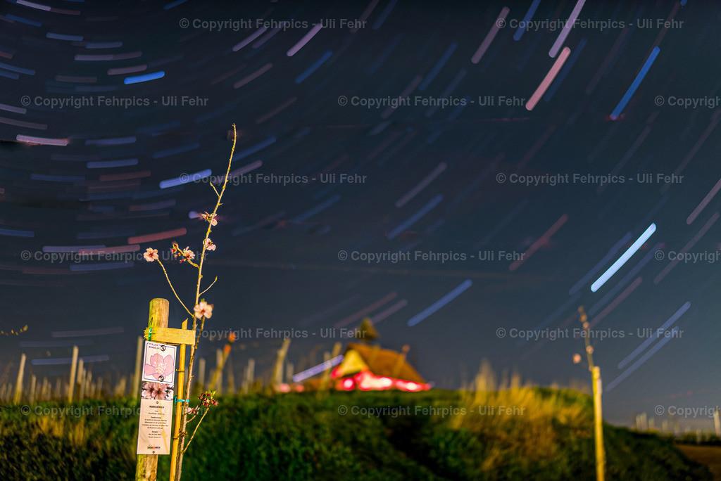 Astromandel am Michelsberg | Eine zarte Mandelblüte vor der Michaelskapelle mit Strichspuren der Sterne um den Polarstern.