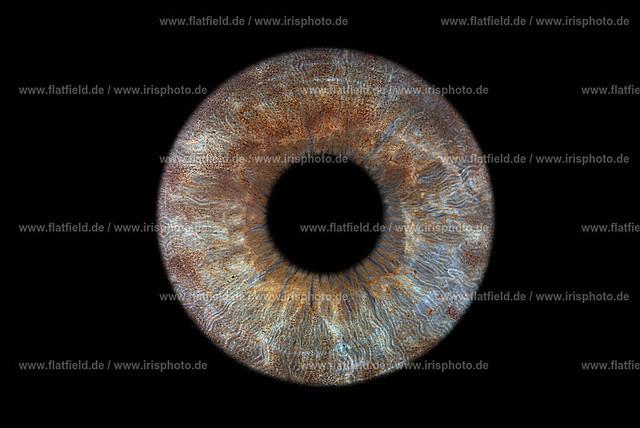 Iris-foto-Beispiel-460