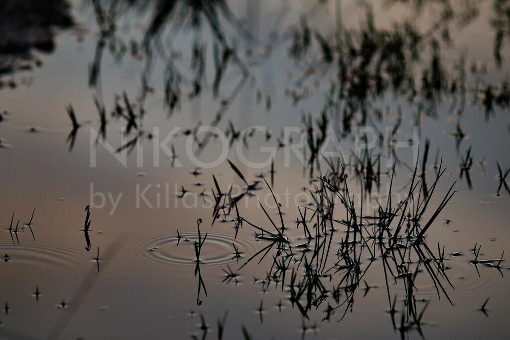 Moorgewässer im Abendlicht | Das Goldenstedter Moor liegt im Landkreis Vechta. Laut Wikipedia erstreckt sich das Goldenstedter Moor auf einer Fläche von ca. 640 Hektar und gilt als eine der wertvollsten Moorlandschaften in Deutschland. Insbesondere im Herbst rasten tausende Kraniche im Goldenstedter Moor und bieten ein beeindruckendes Naturschauspiel im Moorgebiet.