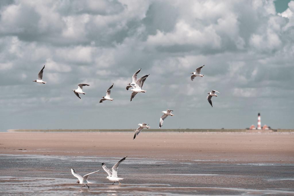 Möwen vor Westerhever | Strandspaziergang an der Nordsee