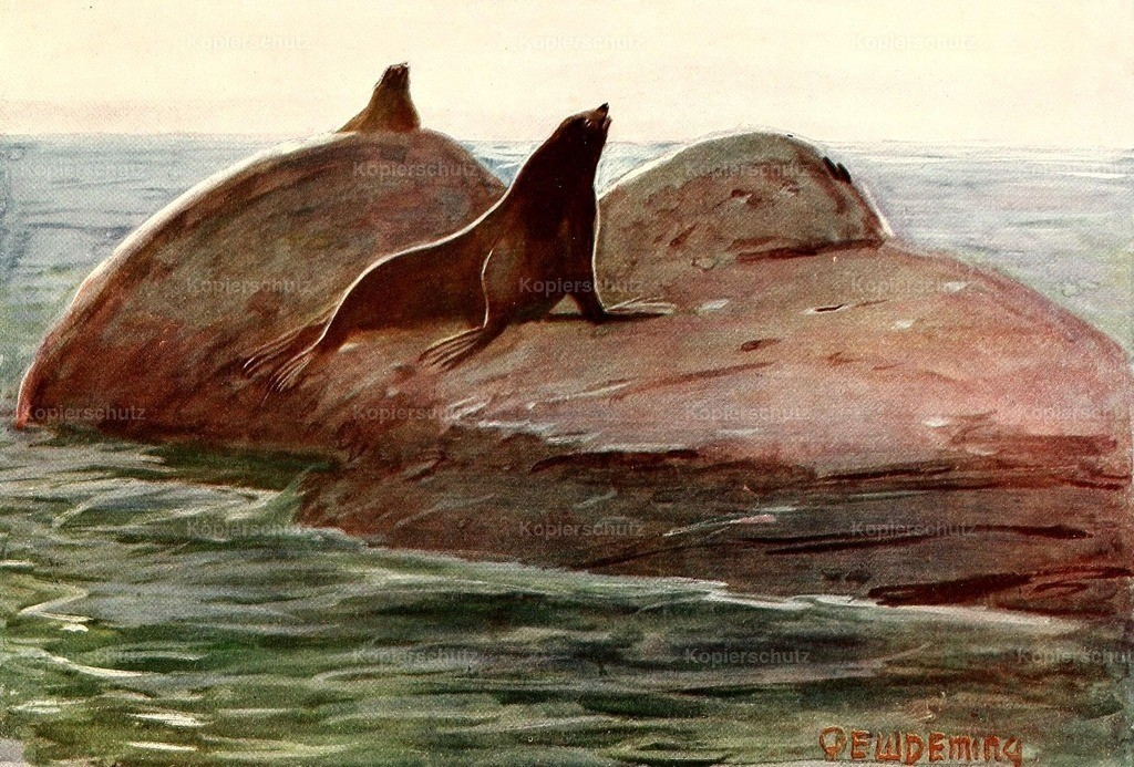 Deming_ E.W. (1860-1942) - American Animal Life 1916 - Seal
