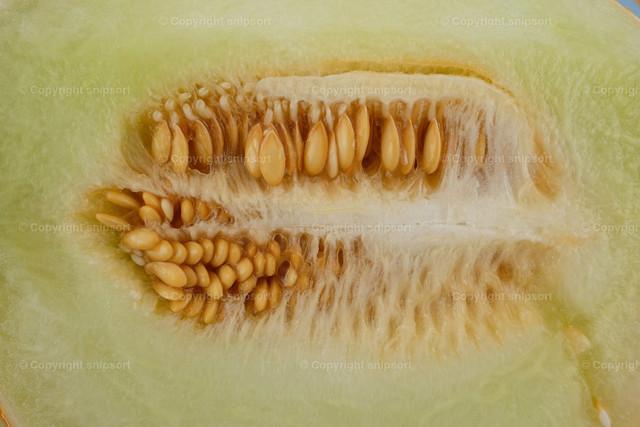Aufgeschnittene Honigmelone | In der Mitte aufgeschnittene Honigmelone mit nicht herausgeschälten Kernen.