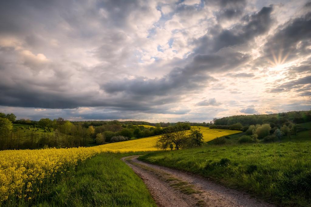 The Meadows | Rapsblüte im ostholsteinischen Hügelland