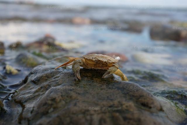 Kleine Krabbe | Eine kleine Krabbe auf einem Stein mit Meer im Hintergrund.