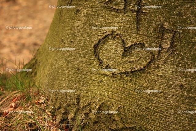 Schnitzerei Herz an Baum | ein Herz in einen Baumstamm geschnitzt bei Tageslicht