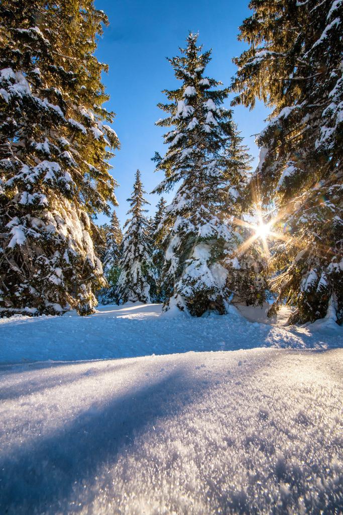 Seefeld | Winter in Seefeld