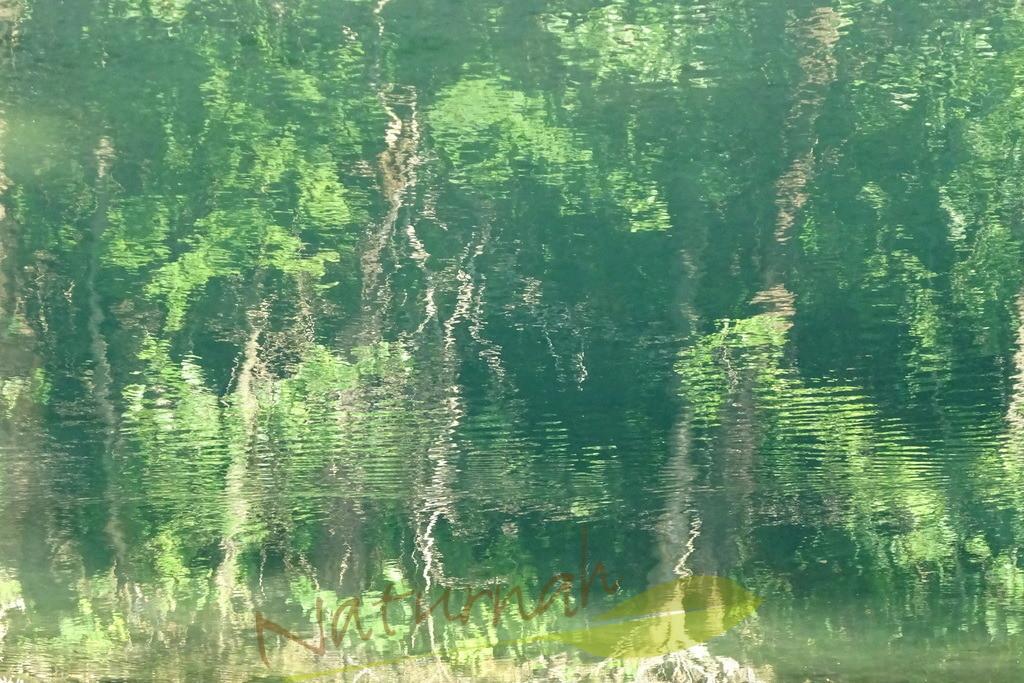 Wasserwald | Wer den Wasserwald bei sich hat, taucht ein in sinnliche Formen und nährt seine Seele mit hoffnungsvollem Grün.