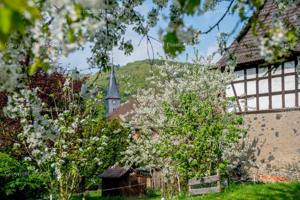 Schlierbach 2 | Lindenfels, Schlierbach in Fruehlingslaune, Schmuckbild,  Bild: Thomas Neu