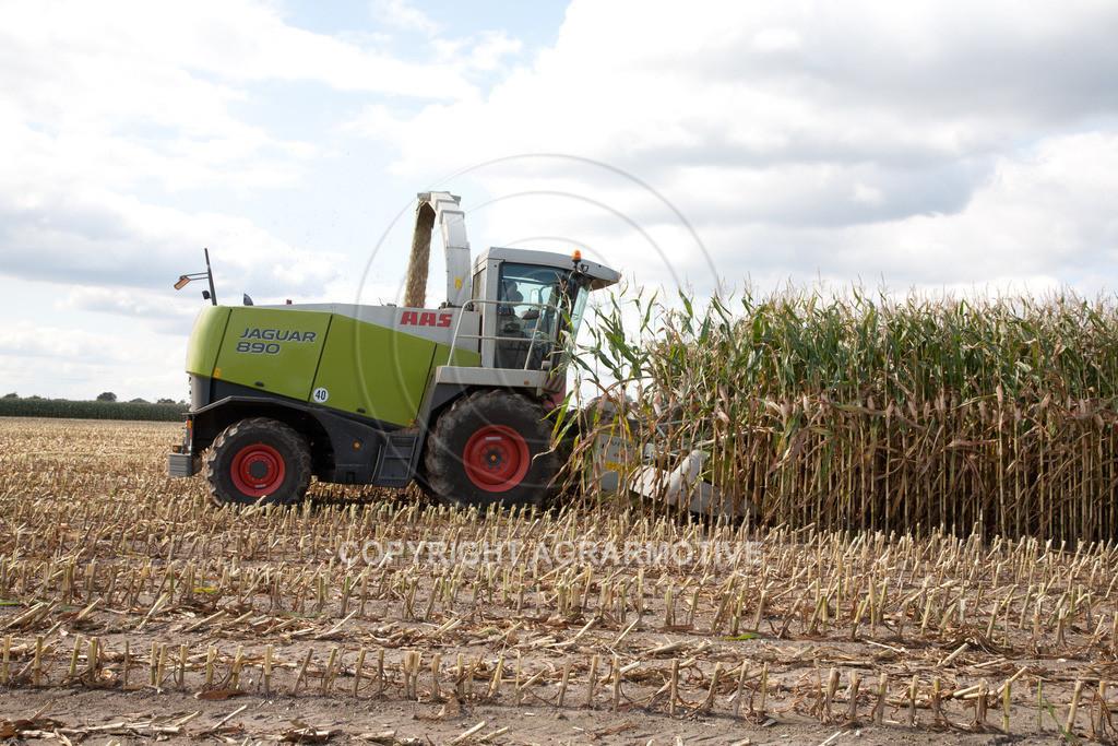 20080914-IMG_9084 | Silomais wird gehäckselt - AGRARFOTO Bilder aus der Landwirtschaft