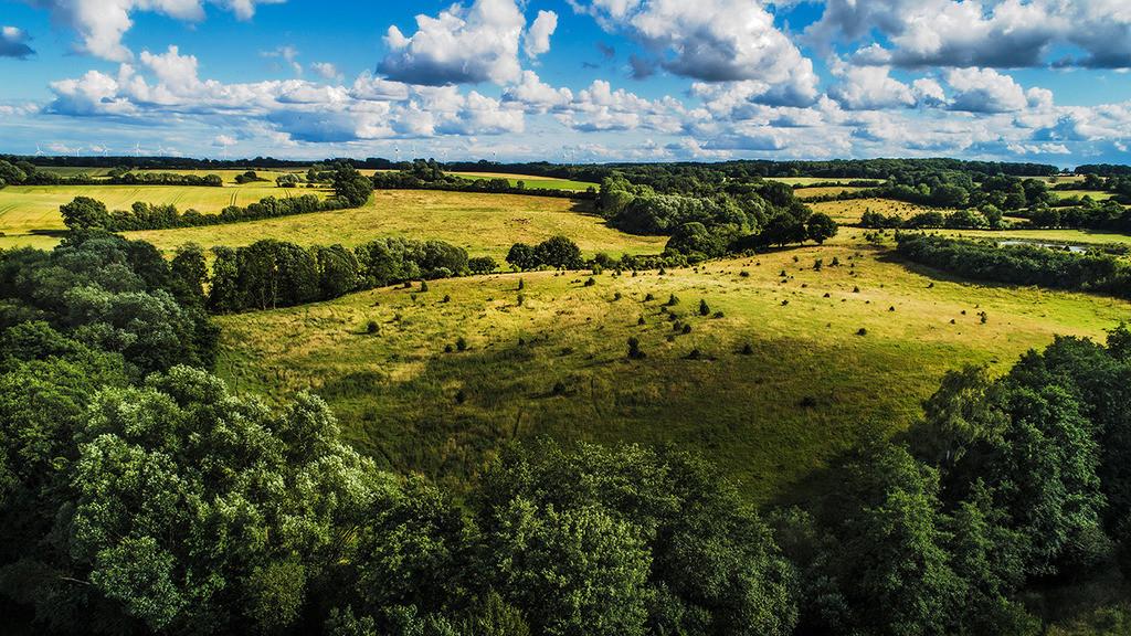 Wilde Weide | Wilde Weide im Stiftungsland Barnitz, Stormarn