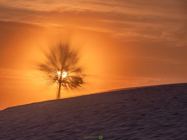 Wintermorgen   Magisches Licht an einem winterlichen Morgen