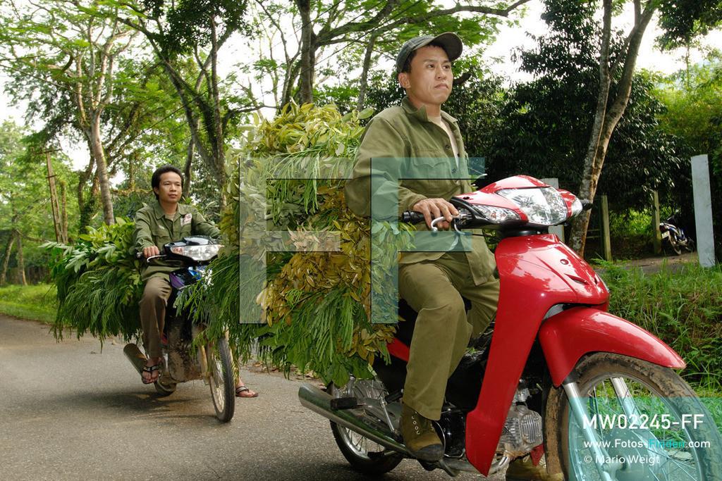 MW02245-FF   Vietnam   Provinz Ninh Binh   Reportage: Endangered Primate Rescue Center   Tierpfleger bringen zweimal täglich mit dem Motorrad spezielle Blätter für die Affen. Der Deutsche Tilo Nadler leitet das Rettungszentrum für gefährdete Primaten im Cuc-Phuong-Nationalpark.    ** Feindaten bitte anfragen bei Mario Weigt Photography, info@asia-stories.com **