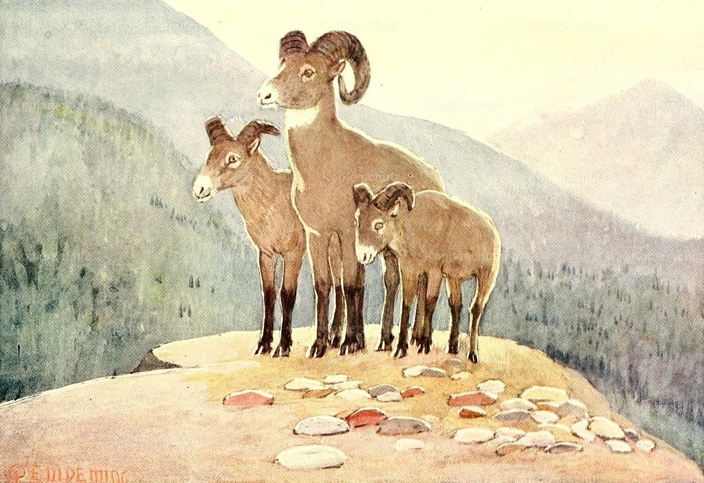 Deming_ E.W. (1860-1942) - American Animal Life 1916 - Mountain Sheep