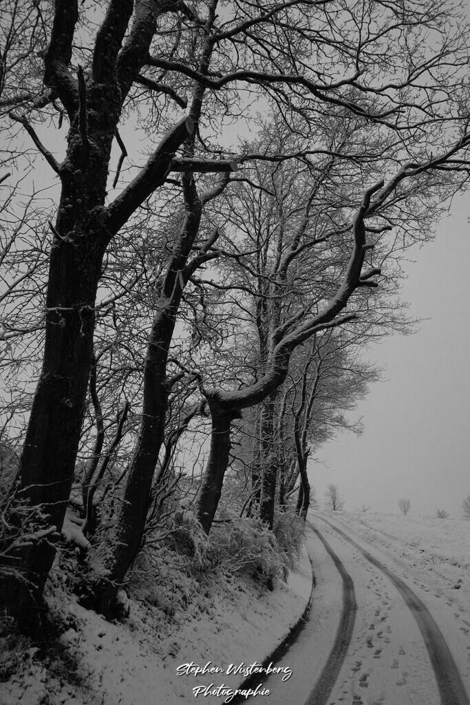Snowy Trees | Schnee-Idylle bei Waroba in Schwarz-Weiss