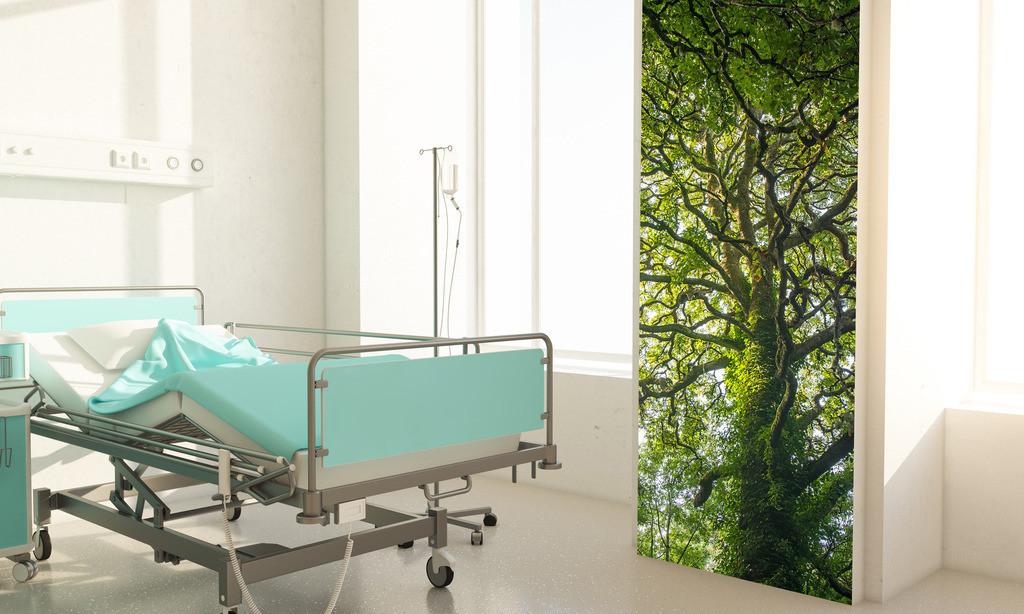 Baummotiv für ein Patientenzimmer in einer Klinik   Anwendungsbeispiel für ein Patientenzimmer in einerm Krankenhaus. Hier bietet sich als Material eine Fototapete an. Sie finden dieses Motiv in der Galerie Farben und Formen - Bäume und Grün