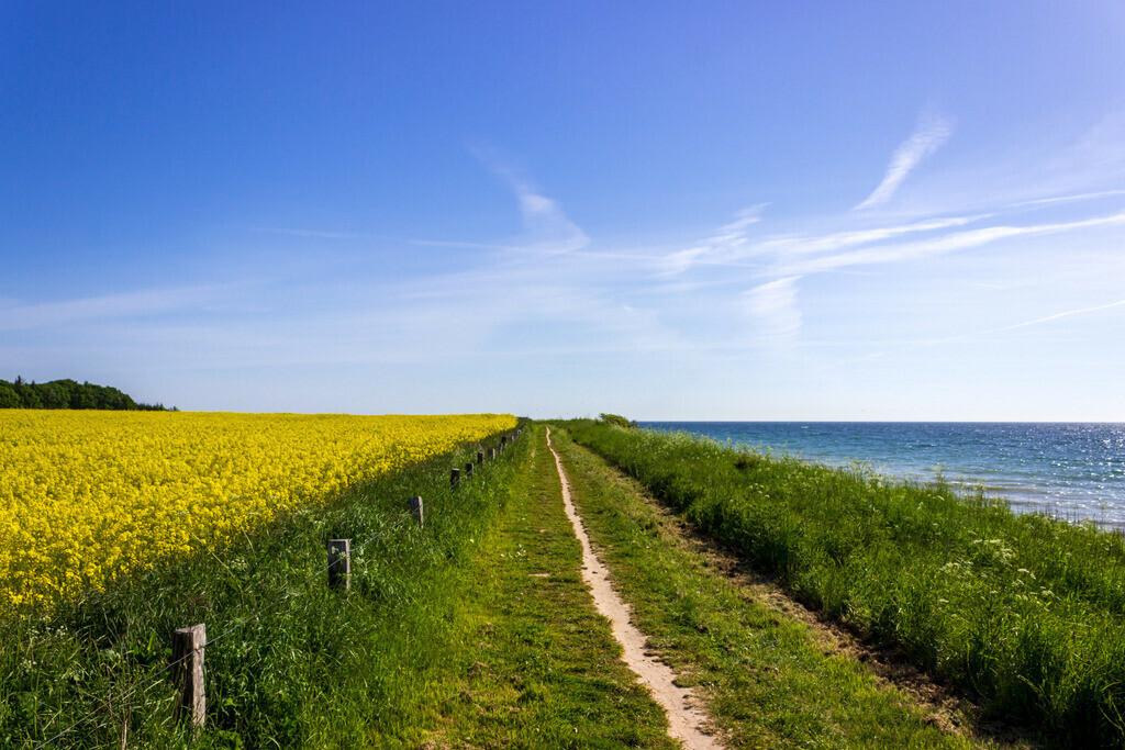 Raps an der Ostsee | Rapsblüte an der Steilküste in Waabs