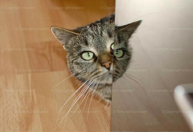 Katze mit Reflektion | Eine scheue Katze schaut um die Ecke.