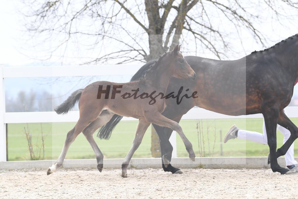 Kat-Nr. 13 HF Von Und Zu 6210415