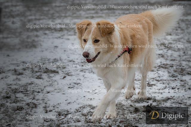 Hund 1 -Vorschaubild