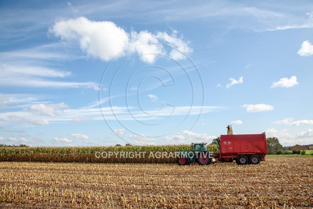 20080914-IMG_8979 | Silomais wird gehäckselt - AGRARFOTO Bilder aus der Landwirtschaft