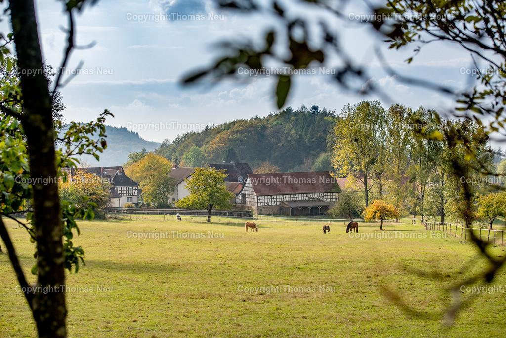 DSC_8553 | bli,Odenwaldidylle , Tourismus, Blick auf Knoden, weidende Pferde,Herbststimmung,  ,, Bild: Thomas Neu