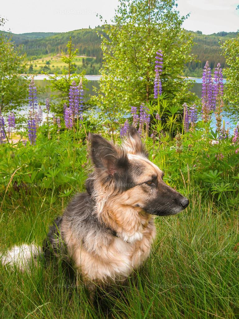 Strassenhunde-x6