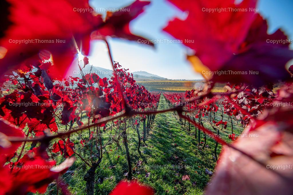 DSC_0399 | bbe,bre,goldener November, die Natur entschädigt im Moment für die Corona bedingten Maßnahmen , hier Blick auf die Weinberge zwischen Bensheim und Heppenheim kurz nach Sonnenaufgang, ,, Bild: Thomas Neu