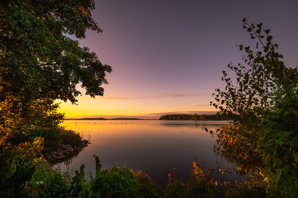 When the sun wakes up the lake | A Danish lake in the first morning sun, with glowing plants in the foreground