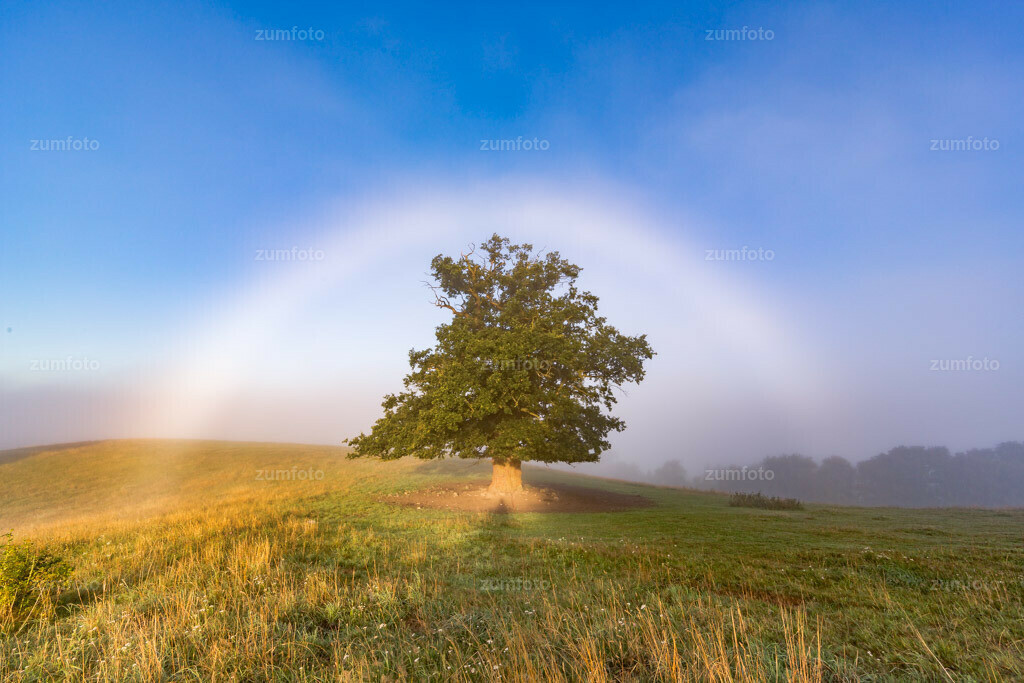 0-120811_0646-4853 | Dateigröße 5760 x 3840 Pixel  Nebelbogen über Eiche